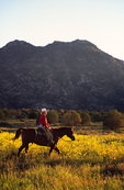 Horse back riding through spring wildflowers below Granite Mountain, Prescott, Arizona