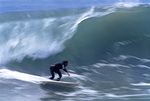 Surfing the winter waves off Southern California