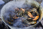 Fresh lobsters are thrown in the cooking pot at a picnic at Warren Island State Park, Maine