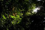 The sun shines in thru a light gap in the rain forest in Golfo Dulce, Costa Rica