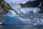 Icebergs melt slowly in the forebay of the South Sawyer Glacier, Tracy Arm, Alaska
