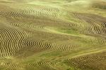 Contour plowed fields, viewed from Steptoe Butte, Palouse, Eastern Washington