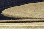Contour plowed wheatfields, Palouse, Eastern Washington