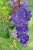 A watercolor version of wine grapes at Freitas Vineyard, Verde Valley, Arizona