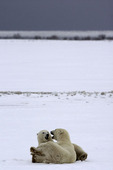 Playing on the tundra near Hudson Bay and Churchill, Manitoba, Canada