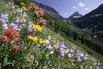 Summer wildflowers near Logan Pass, Mt. Clements in background, Glacier National Park, Montana