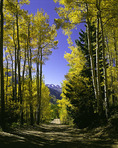 Aspens line the Ophir Pass Road, San Juan Mountains, Colorado