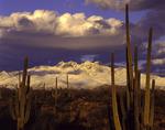Spring snow on Four Peaks, Mazatzal Mountains, Arizona
