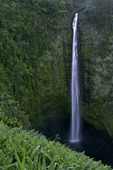 Akaka Falls at twilight, Akaka Falls State Park, Big Island, Hawaii