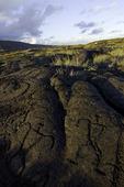Petroglyphs at Pu'u Loa, Chain of Craters road, Hawaii Volcanoes National Park, Big Island, Hawaii