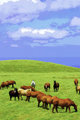 Horses graze in pastures high above the Pcific Ocean, in the Kohala Mountains, Big Island, Hawaii