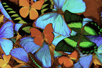 Butterflies at the Butterfly Conservancy, Key West, Florida