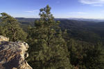 Mogollon Rim view of the national forest, Arizona