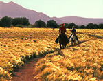 Riding the grasslands bordering Granite Mountain, Prescott, Arizona