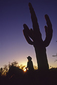 Riding through saguaros at sunset, Tucson, Arizona