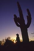 Riding through saguaros at sunset, Tucson, Arizona