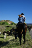 Father-son cattle drive, Escalante, Utah