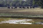 Elephants roam near Chindeni bush camp, South Luangwe National Park, Zambia