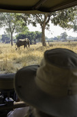 An elephant viewed from the Land Rover in South Luangwa National Park, Zambia, Africa