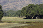 Elephants roam near Chindeni bush camp, South Luangwa National Park, Zambia
