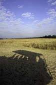 Shadow of Land Rover on a morning game ride in South Luangwa National Park, Zambia, Africa