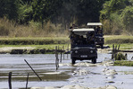 Crossing the Kapamba River in South Luangwa National Park, Zambia, Africa