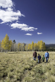 Family hiking to aspens in autumn, San Francisco Peaks, Flagstaff, Arizona