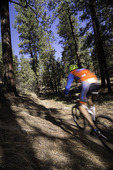 Mountain biking south of the San Francisco Peaks, Flagstaff, Arizona