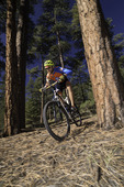 Mountain biking through ponderosa pines south of the San Francisco Peaks, Flagstaff, Arizona