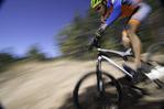 Mountain biking through ponderosa pines south of the San Francisco Peaks, Flagstaff, Arizona