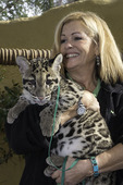 A baby clouded leopard seen backstage at the San Diego Zoo, San Diego, California