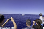 A humpback whale spouts from the blue waters off the Kona Coast, Big Island, Hawaii