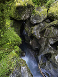 Chasm Creek, Fiordland National Park, South Island, New Zealand