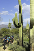 Mountain biking in McDowell Mountain Park, Scottsdale, Arizona
