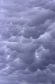 Mammatus clouds grow under a thunderstorm, Mountainaire, New Mexico