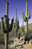 Hiking the East Javelina Trail, Tortilita Mountains, Marana, Arizona