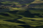 Late afternoon light from Steptoe Butte, Palouse, Washington