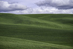 Contour sloughed fields in spring, from Steptoe Butte, Palouse, Washington