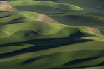 Contour sloughed wheat fields in spring, from Steptoe Butte, Palouse, Washington