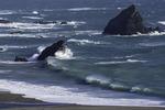 Navarro Beach, Mendocino County, California