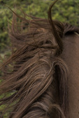 Horseback ride with Explora gaucho in Torres del Paine National Park, Patagonia, Chile