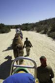 Camel ride east of Cabo San Lucas, Baja California Sur, Mexico