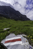 Wildflowers on the Eiger Trail, Bernese Oberland, Switzerland
