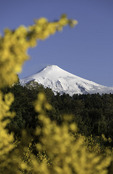 Volcano Villaricca, framed by Scotch broom, Pucon, Chile