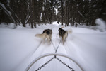 Dogsledding from the Cap au Leste Resort Hotel, Saguenay-Lac-Saint-Jean, Quebec, Canada