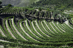 Vineyards cover the slopes above the Rio Douro, Portugal