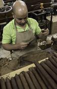 Cigar rolling at the Graycliff Cigar Company, Nassau, Bahamas