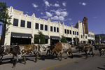 Longhorn steers parade down Polk Street in downtown Amarillo, Texas