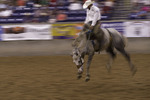 Saddle Bronc ride at the Coors Ranch Rodeo, Amarillo, Texas