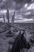 Horseback riding by saguaros, Kerrick James rides on Jasper, from Windwalker Expeditions, Tonto National Forest, Arizona
